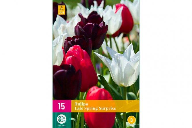Tulipes Late Spring Surprise