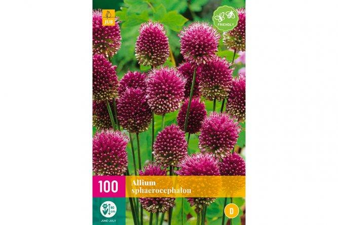 Alliums Sphaerocephalon
