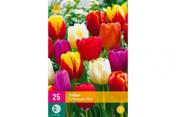 Tulipes Triumph Mix