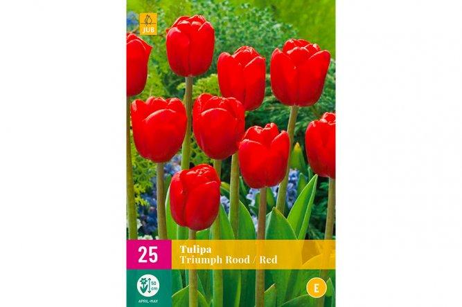 Tulipes Triumph Rouges