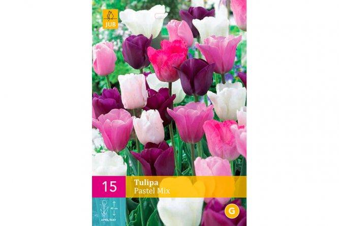 Tulipes Pastel Variées